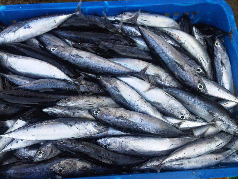 Cara Membuat Tepung Ikan