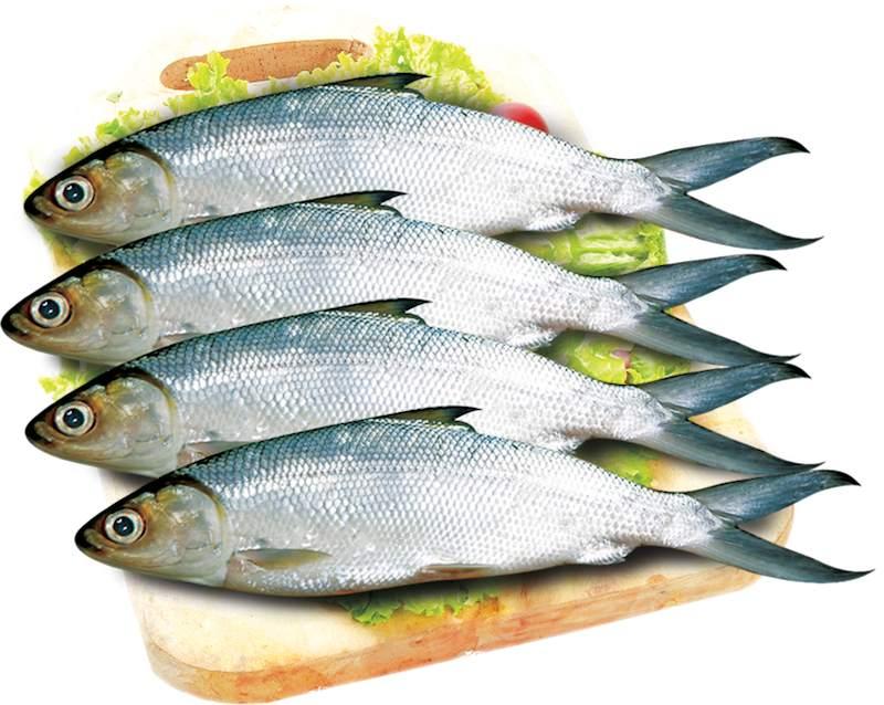 manfaat ikan bandeng