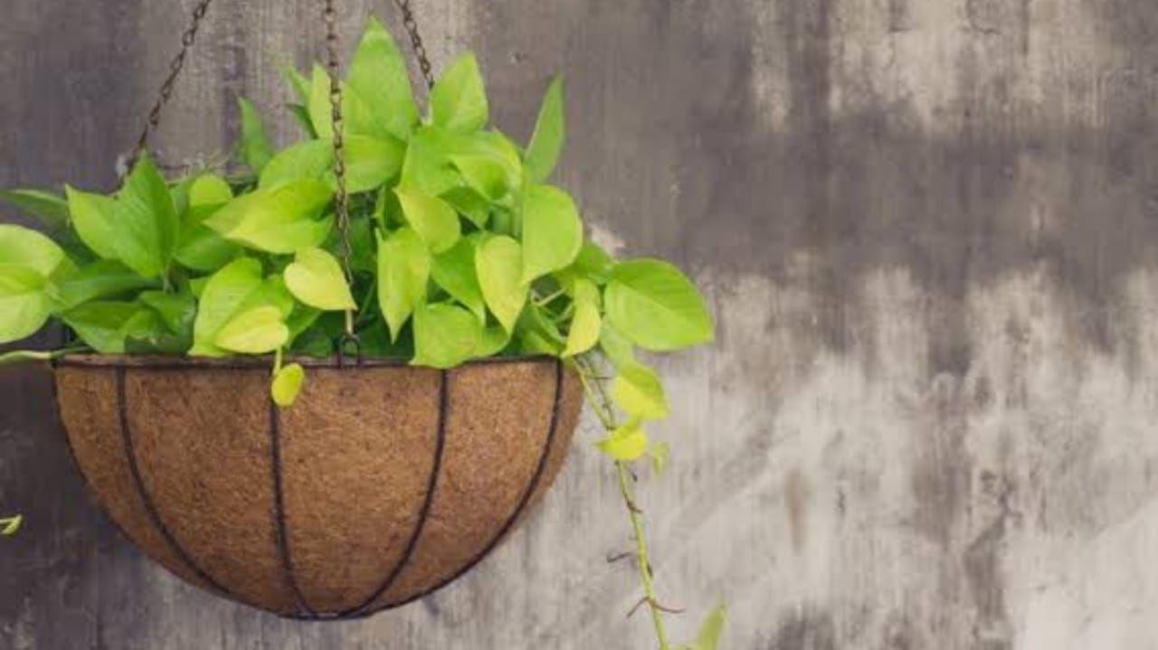 Cara Pembuatan Pot Bunga Dari Sabut Kelapa