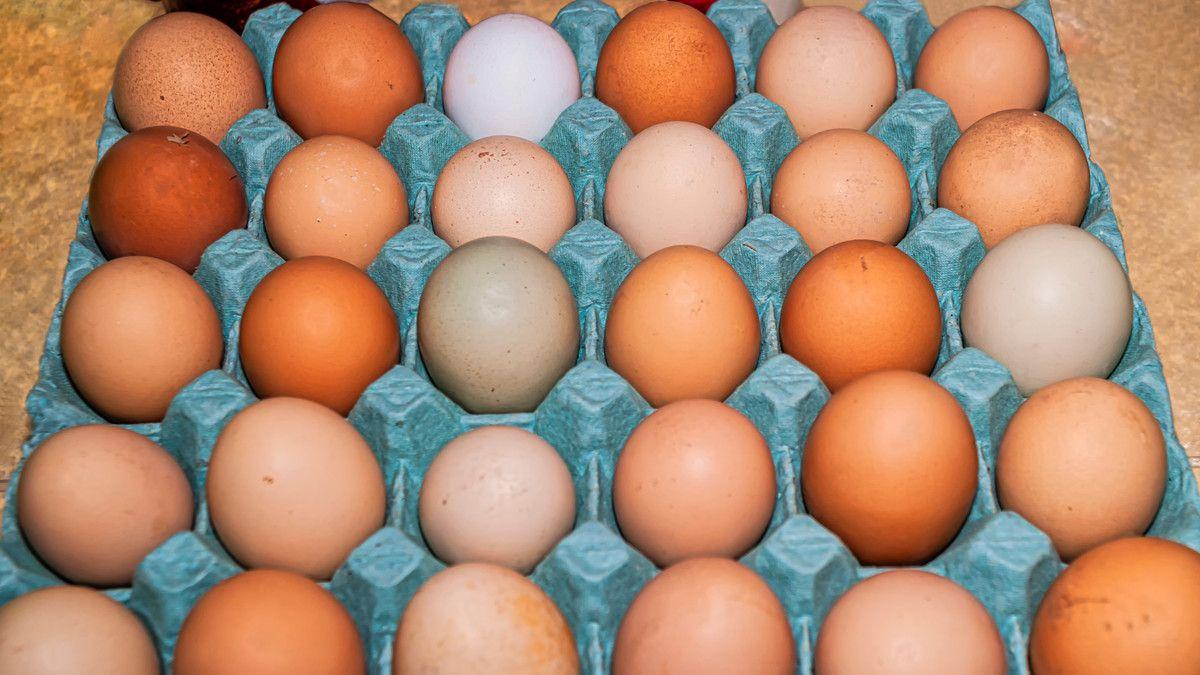 jenis jienis telur