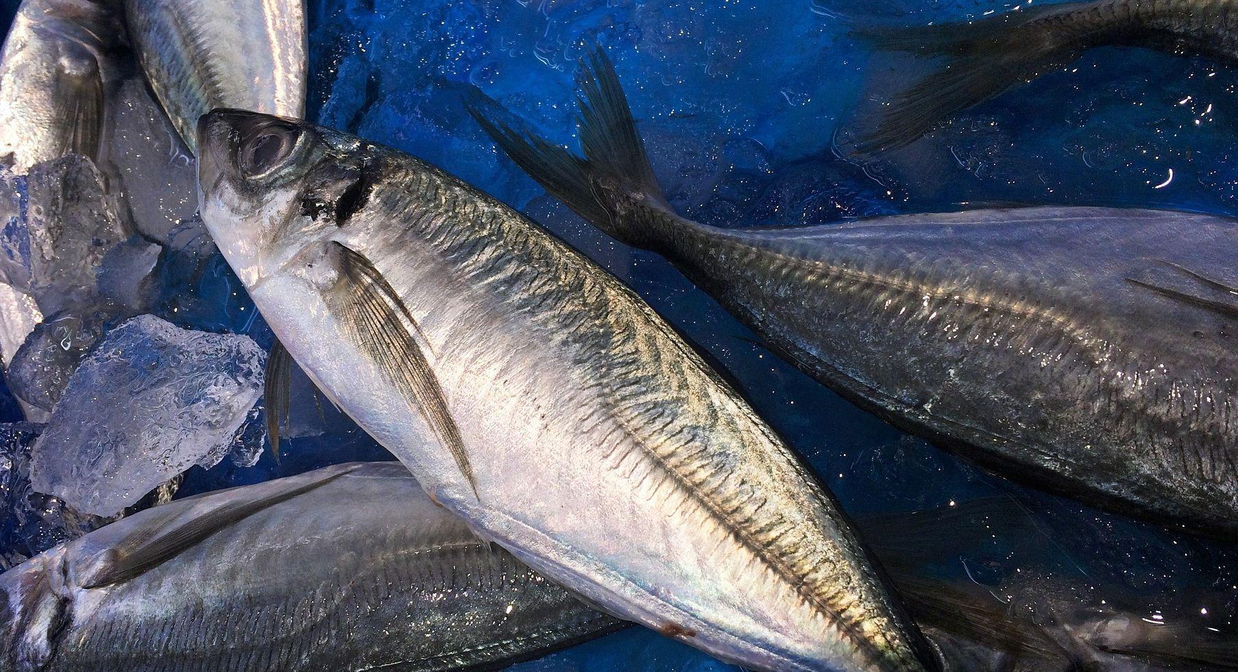 Cara Membuat Kerupuk Ikan Tenggiri Yang Enak Dan Crispy